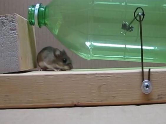מפואר איך לתפוס עכבר בבית? מלכודת ביתית ללכידת עכברים - IsraMedia XF-74